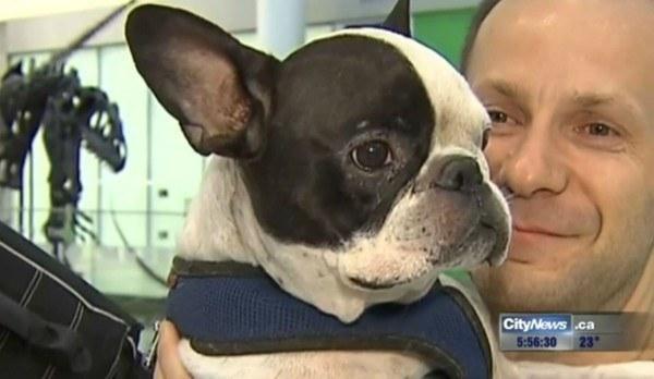 pilot save bulldog