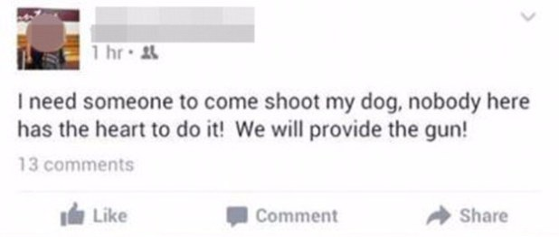 shoot my dog