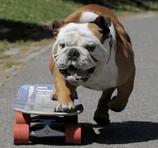 best_dog