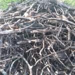 old kindling pile = new bee habitat
