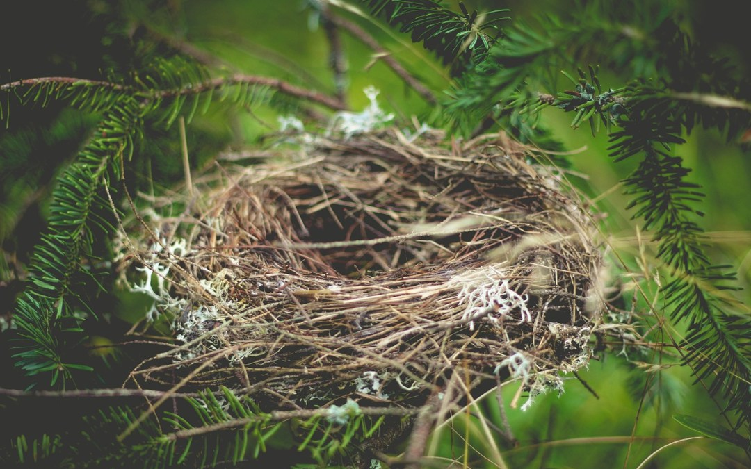 The empty nest (and how to cope)