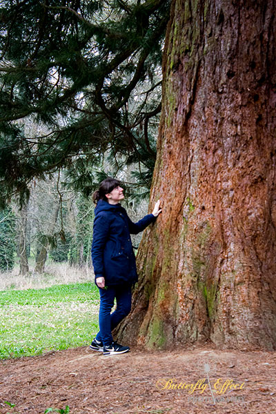 the last one redwood in the castle's park