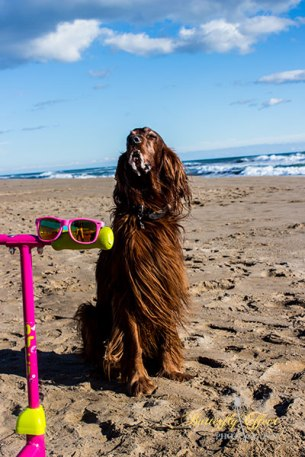 a dog and glasses