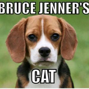 Bruce Jenner Dog Cat