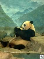 Panda 070411dc 20015 thumb1