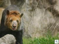 Bear 070411dc 20049 thumb