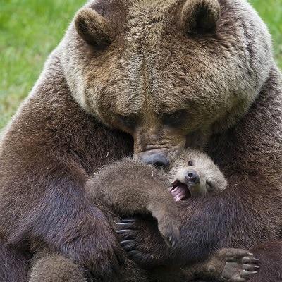 Don't Poke The Mama Bear!