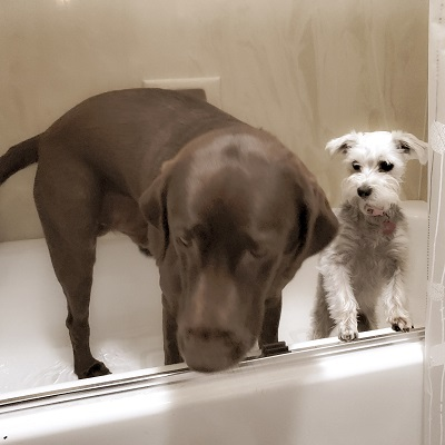 cagle dogs take bath, how to give kids chores