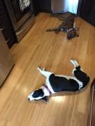 Sleeping in kitchen