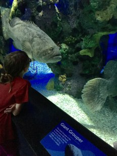 Abby checking out a Giant Grouper