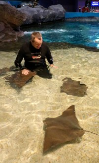 Peter in the water petting the Stingrays