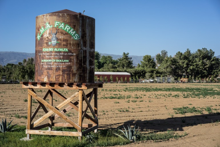 """Even Alfalfa With """"Attitude"""" Is Suffering Greatly From Historic Record Droughts In California."""