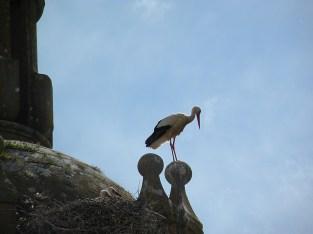 Stork's nest in the spring