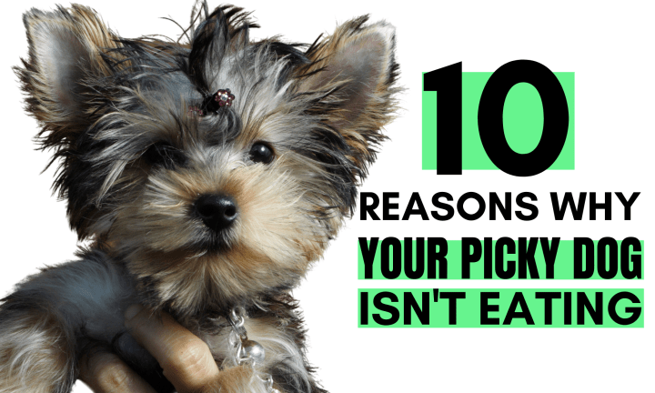 10 Reasons Why your picky dog isn't eating