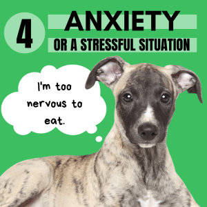"""Have you ever been so nervous you just couldn't eat? Well that happens to some of our picky pups too. They just can't focus on eating or loose their appetite because they are in the """"flight or fight"""" mode."""