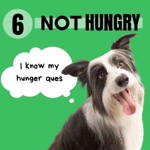 Some fussy dogs are simply just not hungry! They know when they are full and they just don't want to overeat because they already innately know when they are full.