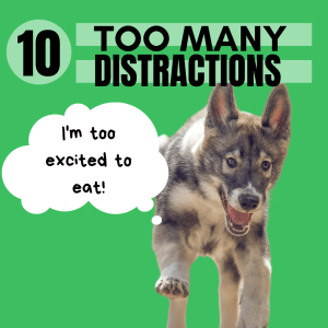 Do you have puppy that is just so excited with the world that they don't have time to eat?
