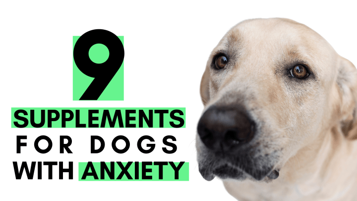 9 Supplements for Dogs with Anxiety