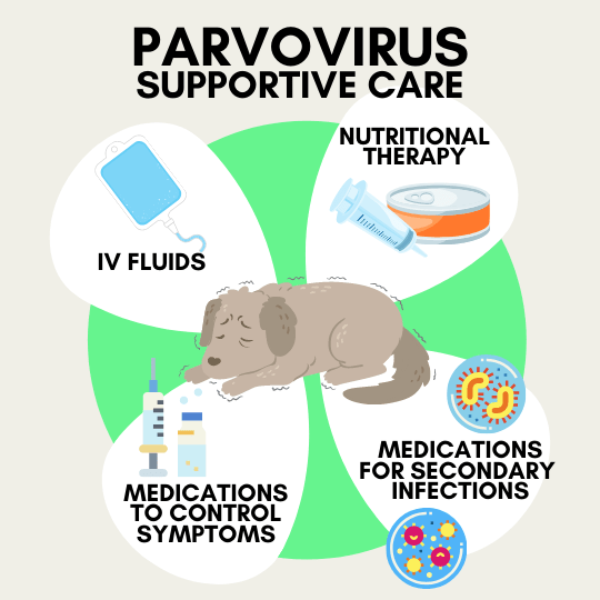 What does supportive care for dogs look like in Parvovirus Treatment - IV fluids, Nutritional Therapy, Medications.