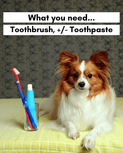 Dog sitting next to toothbrush and toothpaste