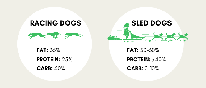 Ideal Greyhound Racing dog food composition was Fat 35%, Protein 25%, Carb 40%.  Ideal Sled Dog ratios were Fat 50-60%, Protein >40%, Carbs 0-10%.  Based upon simple math to make Protein, Fat and Carbs = 100% of energy needs and previously mentioned study.