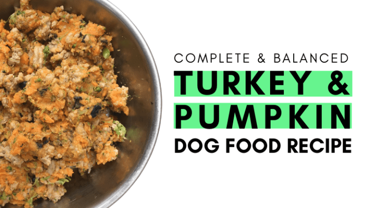 Turkey and Pumpkin Dog Homemade Dog Food Recipe
