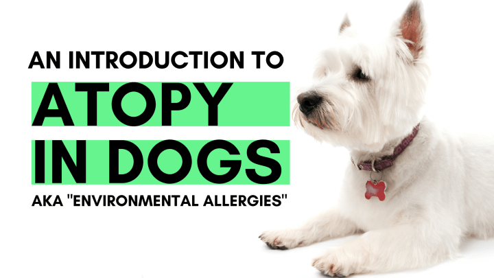 An Introduction to Atopy in Dogs