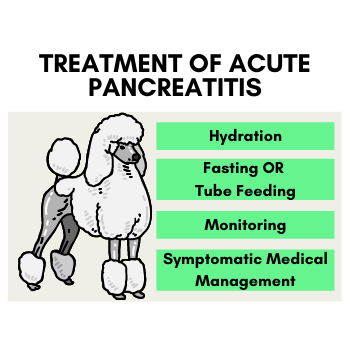 Treatment of Acute Pancreatitis in Dogs