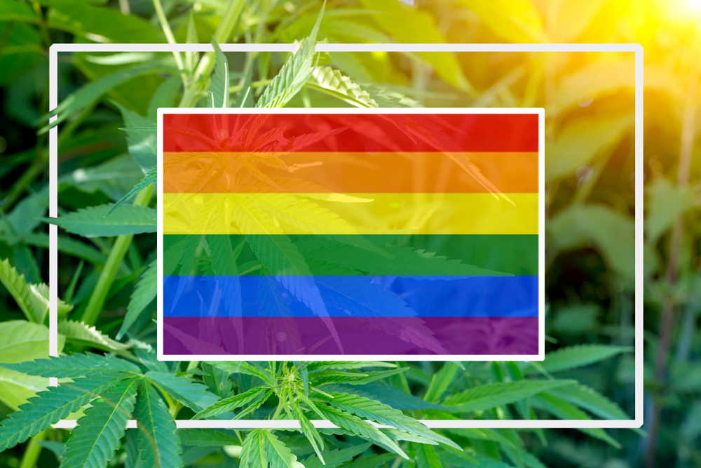 Member Blog: My Journey Through The Intersection of the LGBTQ Community and Cannabis Movement