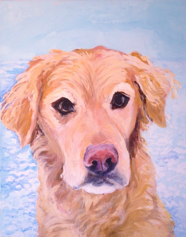 Golden retriever dog pet portrait
