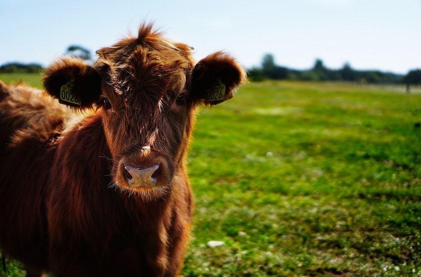 Temasek-backed Godrej Agrovet buys out Israeli partner from dairy venture