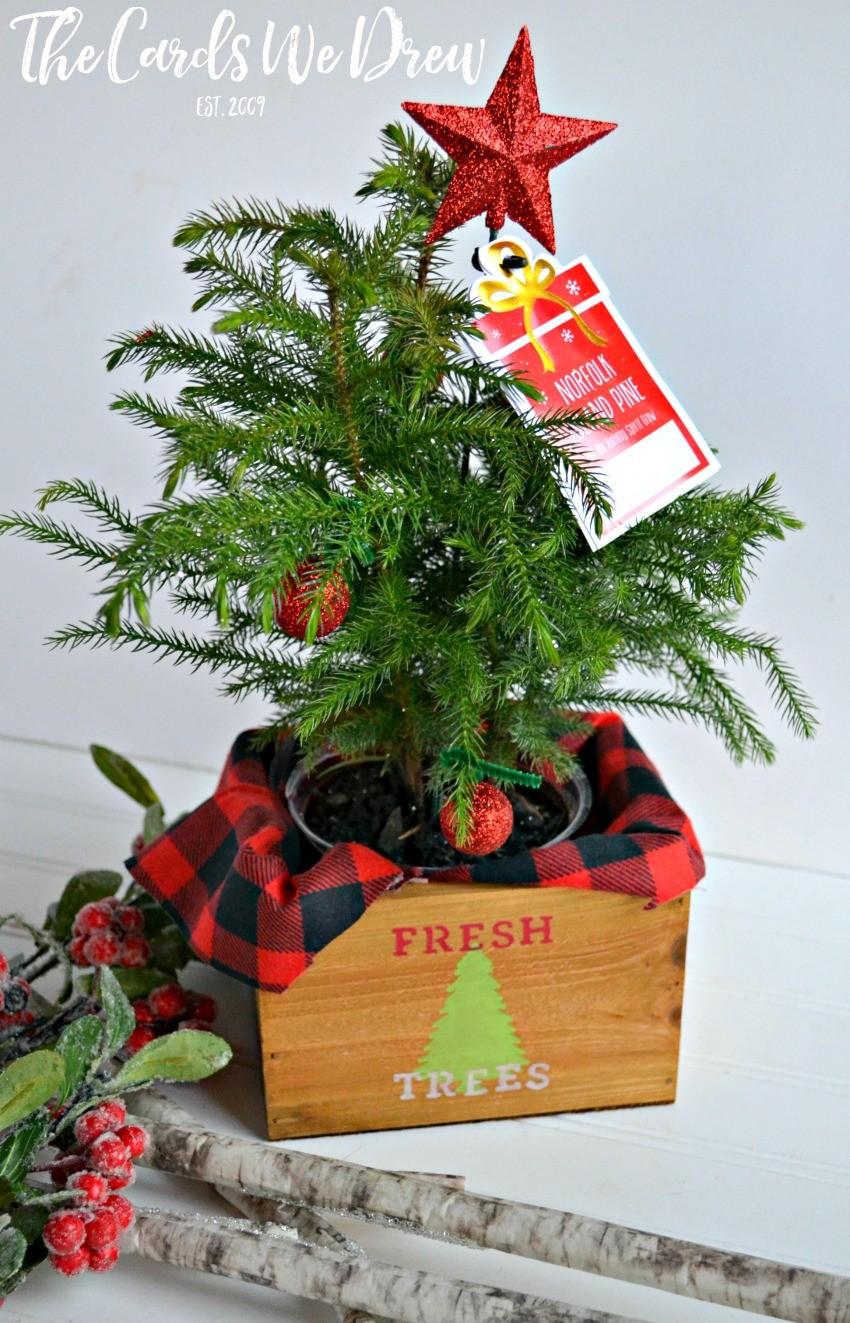 30 Minute Gift Idea Fresh Trees Mini Tree Planter The