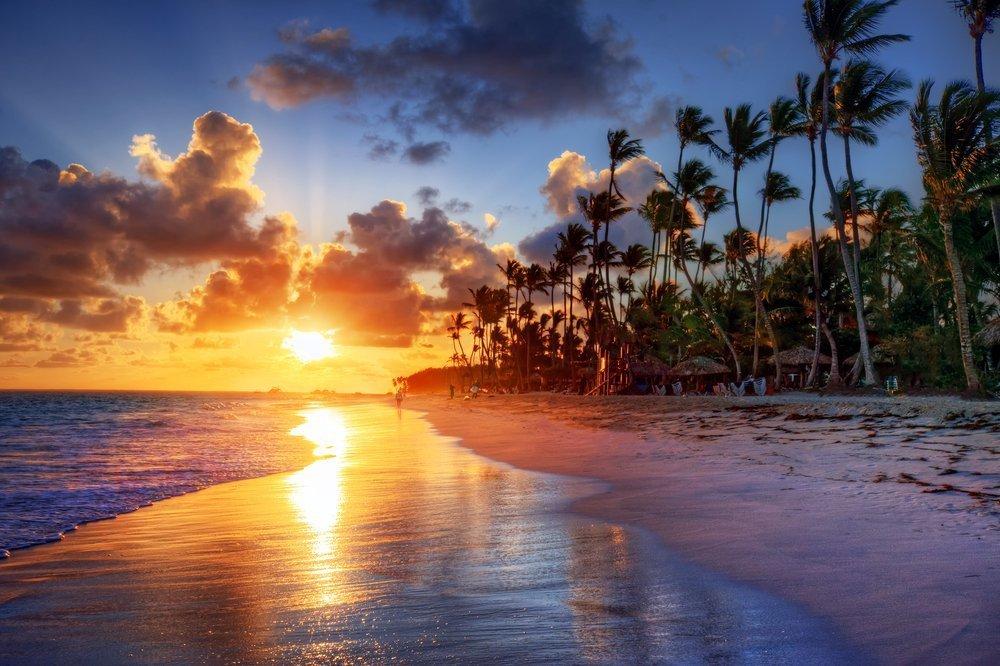 Palm tree sandy beach sunrise