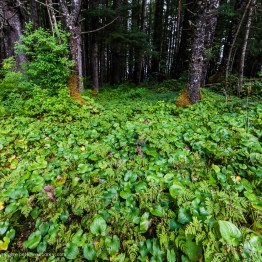 Peter-West-Carey-Alaska2012-0809-3381