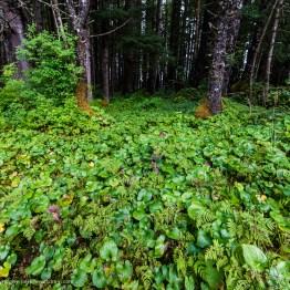 Peter-West-Carey-Alaska2012-0809-3381