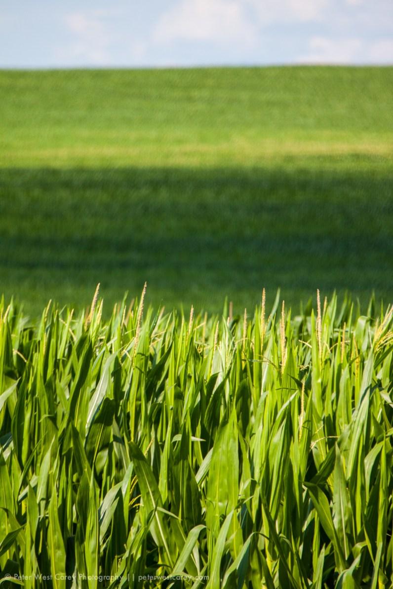 Corn! And more Corn. Iowa, USA