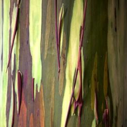 Tree Bark, Hawai'i The Big Island, Hawaii, USA