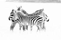 Hiding In Plain Site, Serengeti National Park, Tanzania