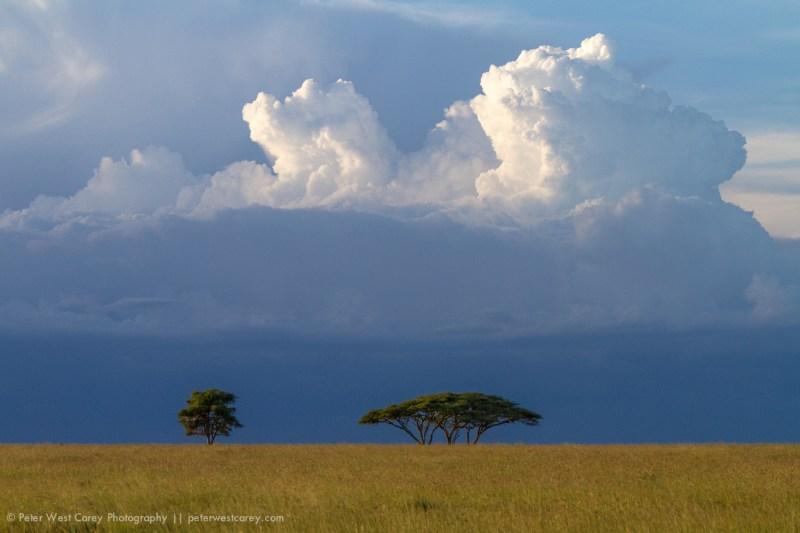 Clouds Over Acacia Trees On The African Savanna, Serengeti Natio