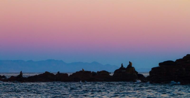 California Sea Lions Resting At Isla Los Islotes Before Dawn, Gu