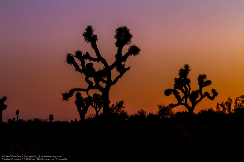 Peter-West-Carey-JoshuaTree2014-1223-7251