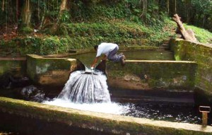 Springs like this one in St. Kitts and Nevis are running low.