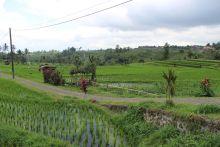 Bali_verkleinert23201