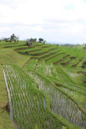 Bali_verkleinert23501