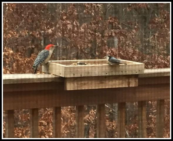 Deck Rail Bird Feeder