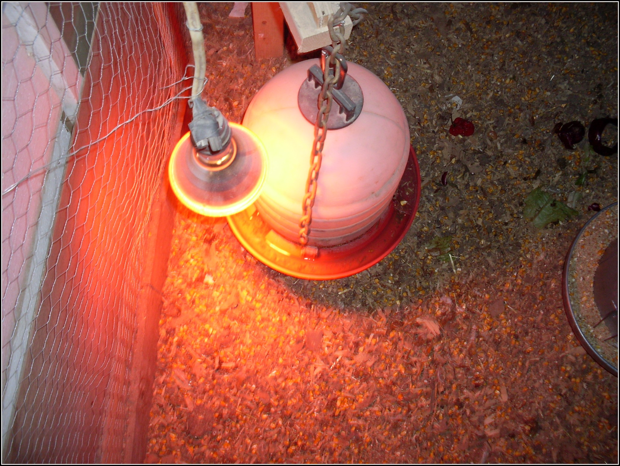 Heat Lamp For Chickens In Winter