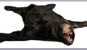 Bear Skin Rugs Ebay