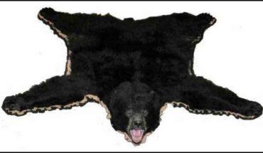 Bear Skin Rugs Faux