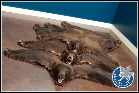 Black Bear Skin Rugs
