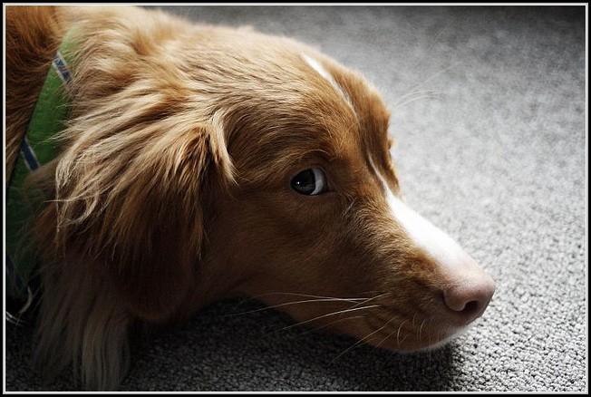 Keep Dog Shedding Under Control